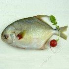 冷冻金鲳鱼 / 每磅