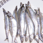 鸿昌隆 - 多春鱼(8 OZ)