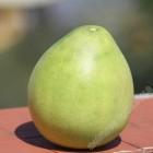 新奇士红柚、文旦 / EA