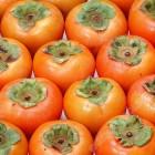 柿子 / 磅