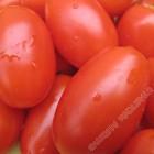 新鲜罗马番茄、罗马西红柿 / 磅
