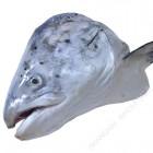 三文鱼头、马哈鱼头 / 个