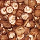 新鲜日本大香菇(花菇) / 磅