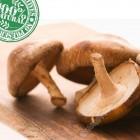 速冻鲜香菇 / 磅(Shiitake,无防腐剂添加)