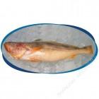 南美产急冻黄花鱼(清好)