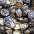 天龙 - 精选冬菇
